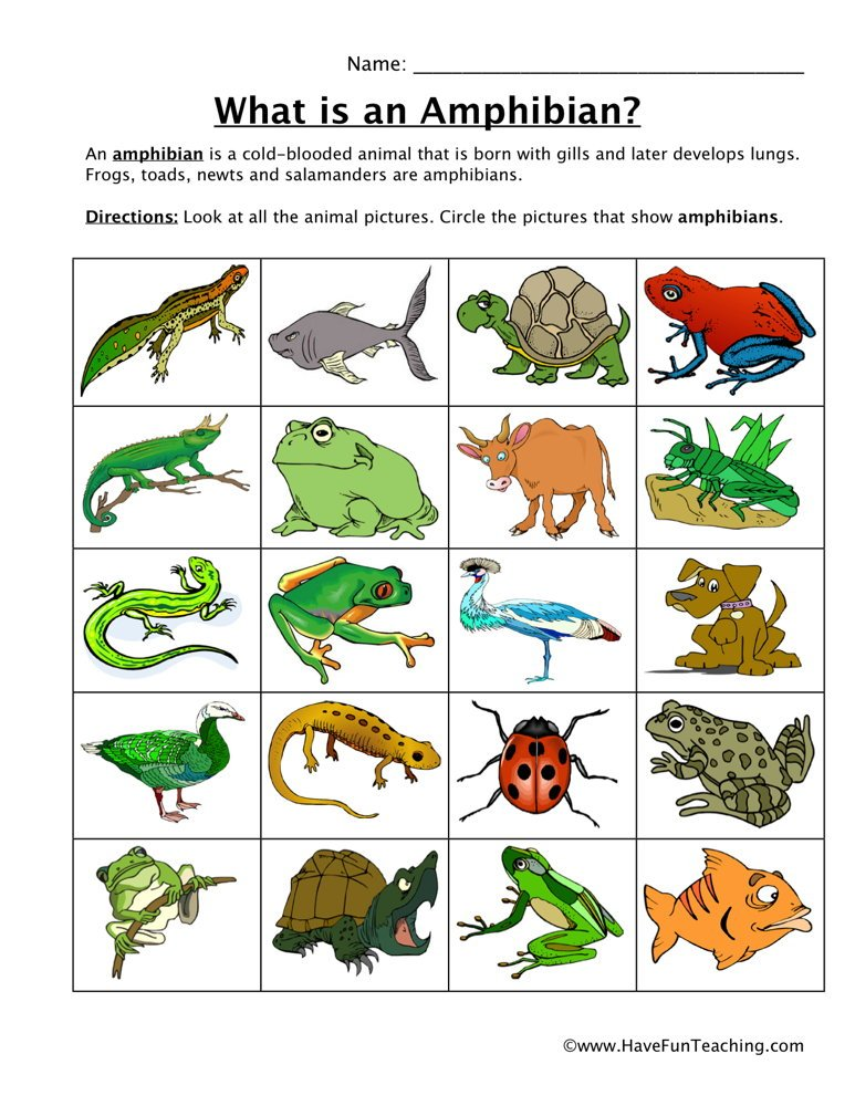 Classifying animals worksheet answers