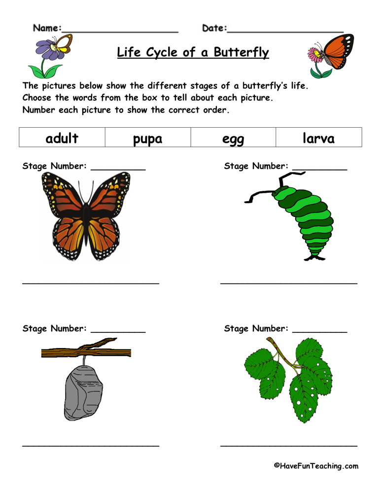 Butterfly Life Cycle Worksheet – Butterfly Cycle Worksheet
