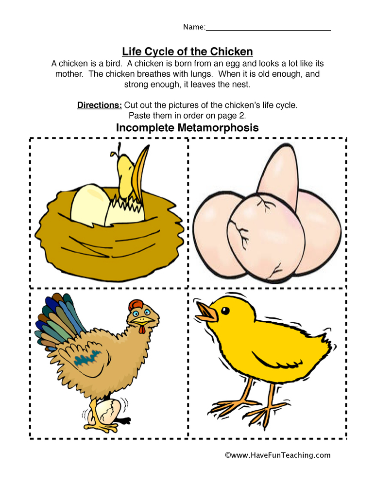 chicken-life-cycle-worksheet