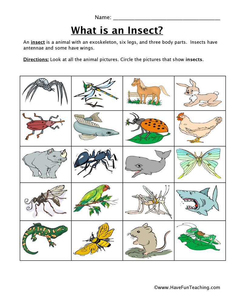 Insect Classification Worksheet - Have Fun Teaching