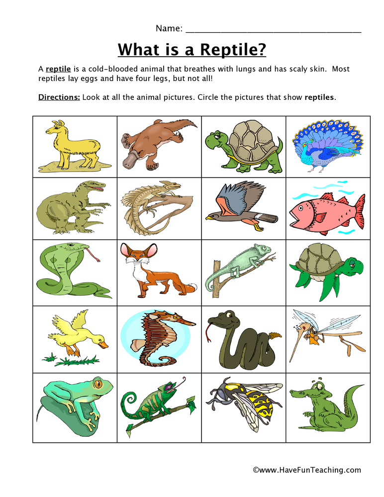 By Have Fun Teaching on June 17, 2013 in Animal Worksheets ...
