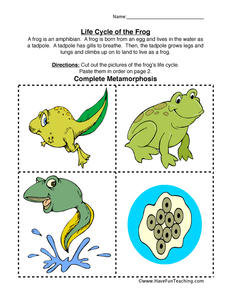 frog-life-cycle-worksheet
