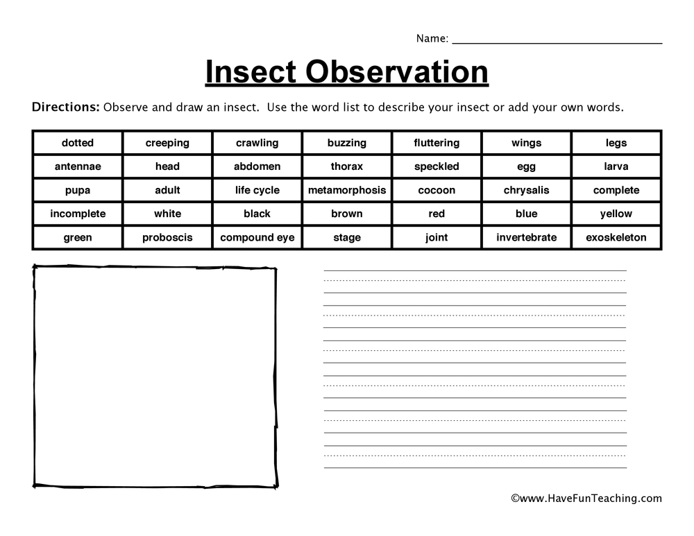insect-observation-worksheet