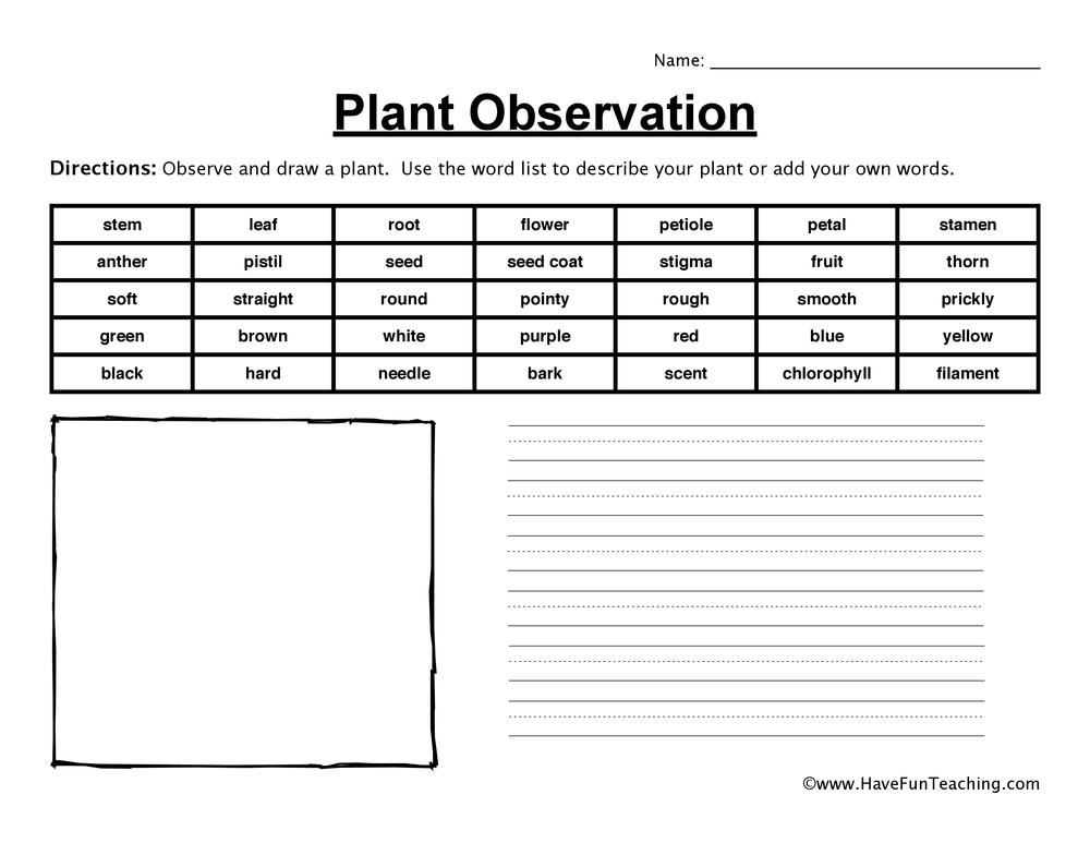 Printable Worksheets create your own printable worksheets : Plant Worksheets | Have Fun Teaching