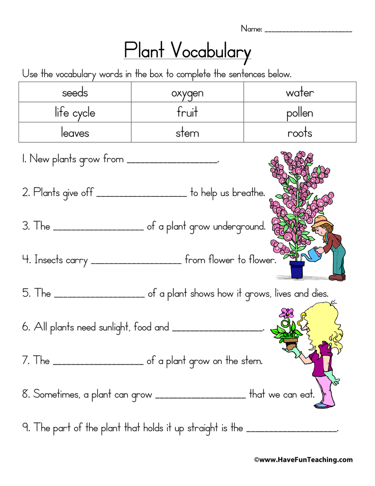 Life Cycle Of A Plant Worksheets Have Fun Teaching