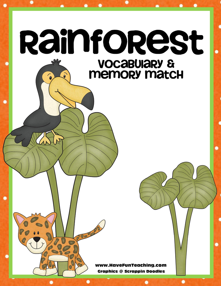 rainforest vocabulary matching activity