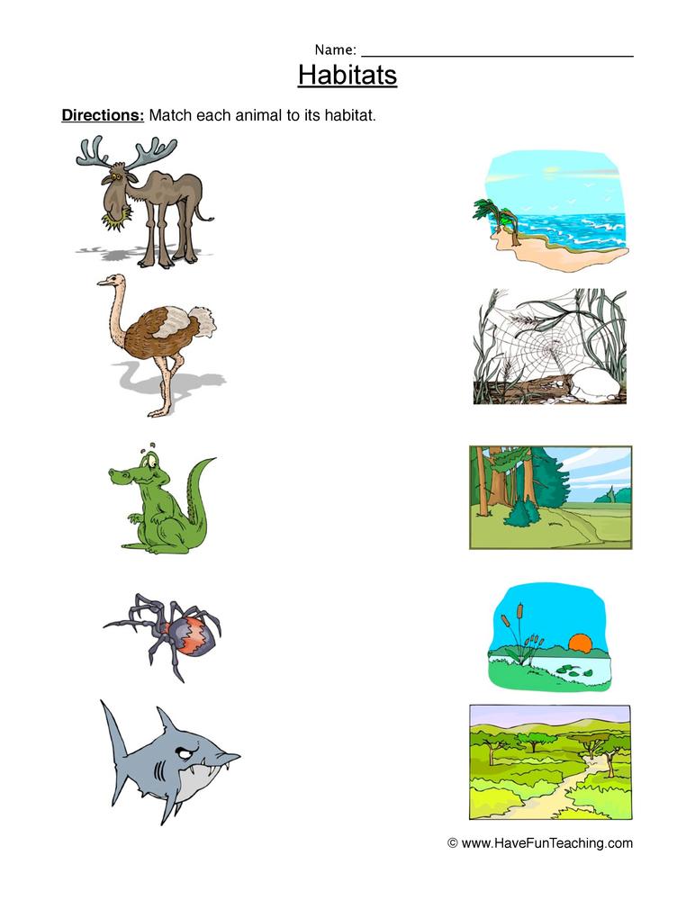 Science Worksheets – 2nd Grade Science Worksheets