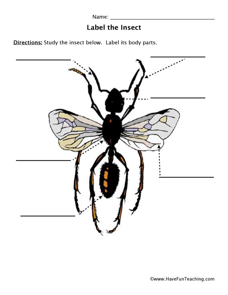 Winged Bug Body Parts Worksheet