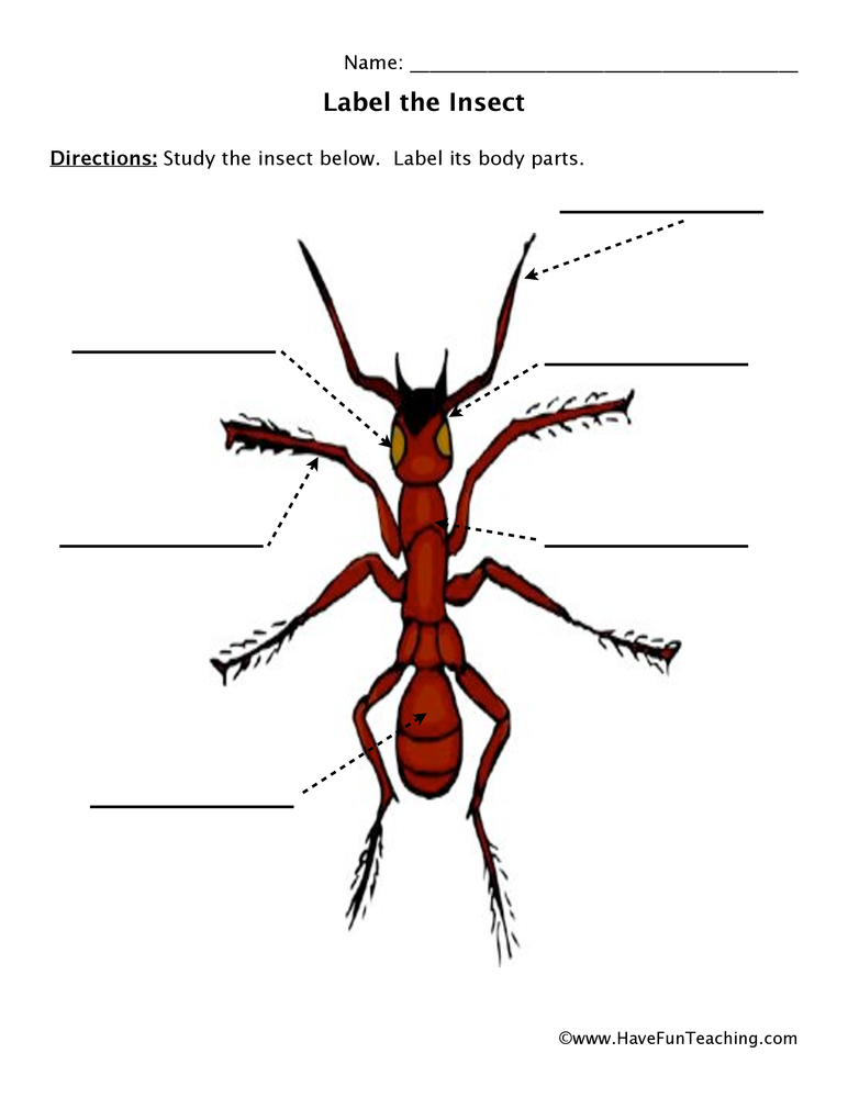 Insect Parts Worksheet – Winged Bugs
