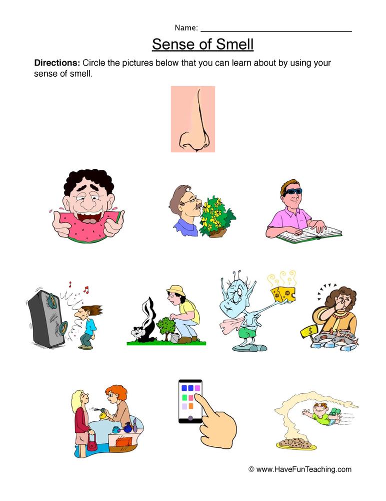 senses worksheet 6