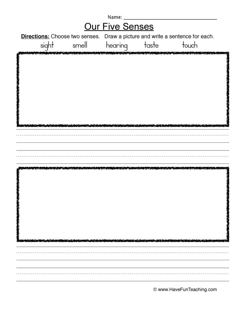 senses worksheet 8