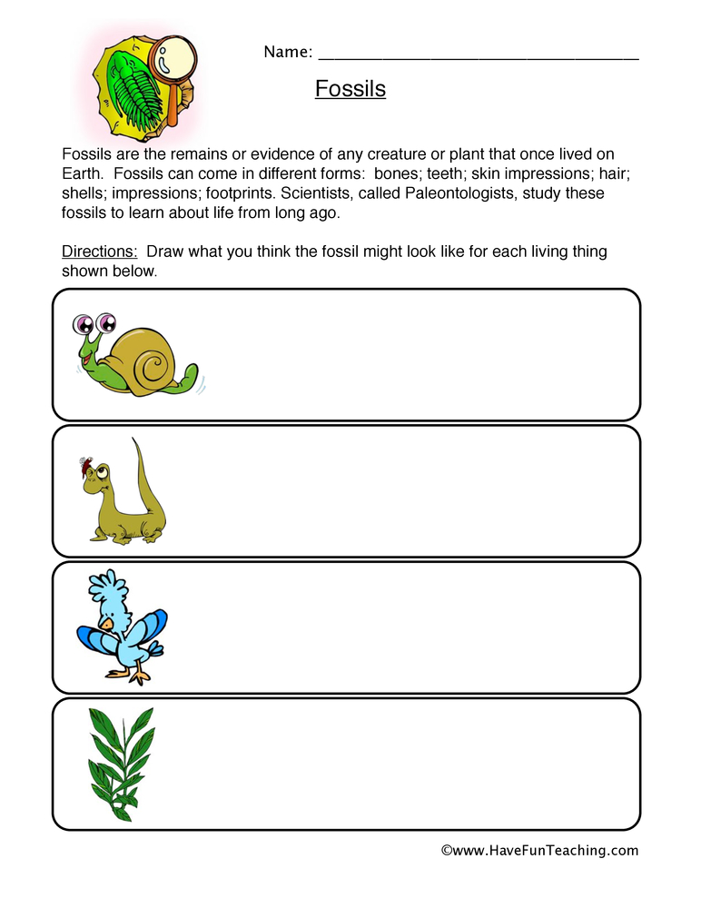 Worksheets Fossil Worksheets fossils worksheet worksheet