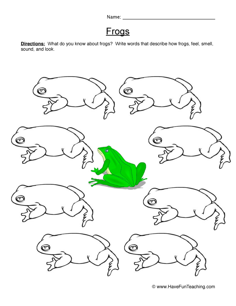 frogs worksheet 2