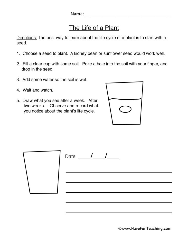 Plant Life Cycle Worksheet Observations