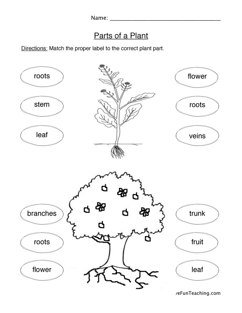 plant parts worksheet