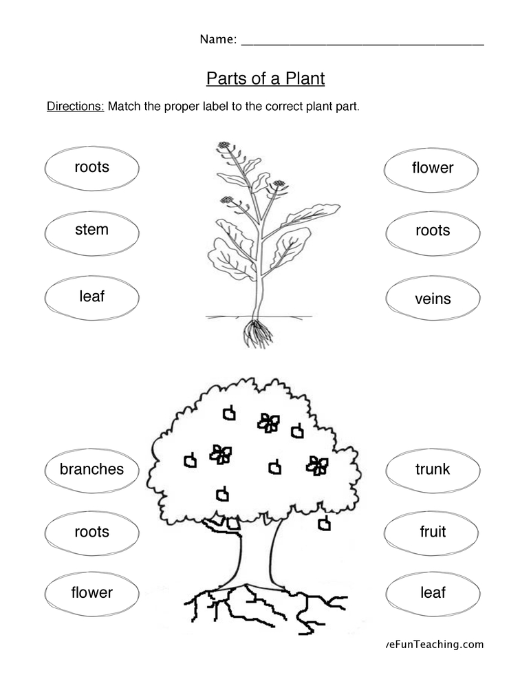 plant parts worksheet have fun teaching. Black Bedroom Furniture Sets. Home Design Ideas