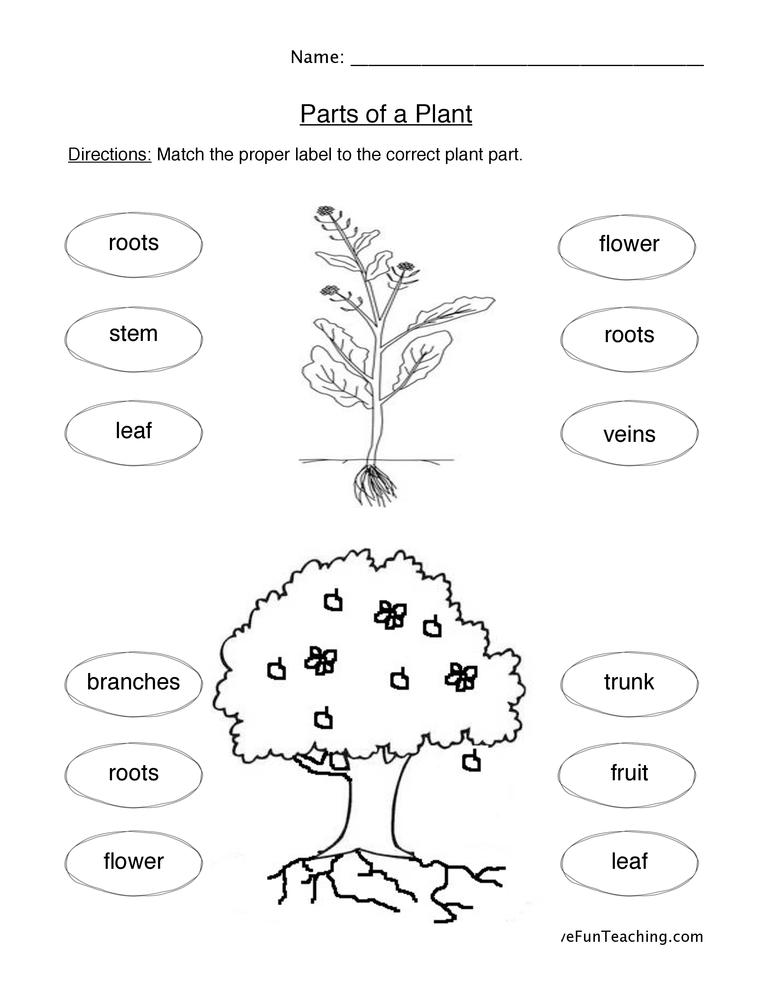 Of Plants Worksheet – Plants Worksheet