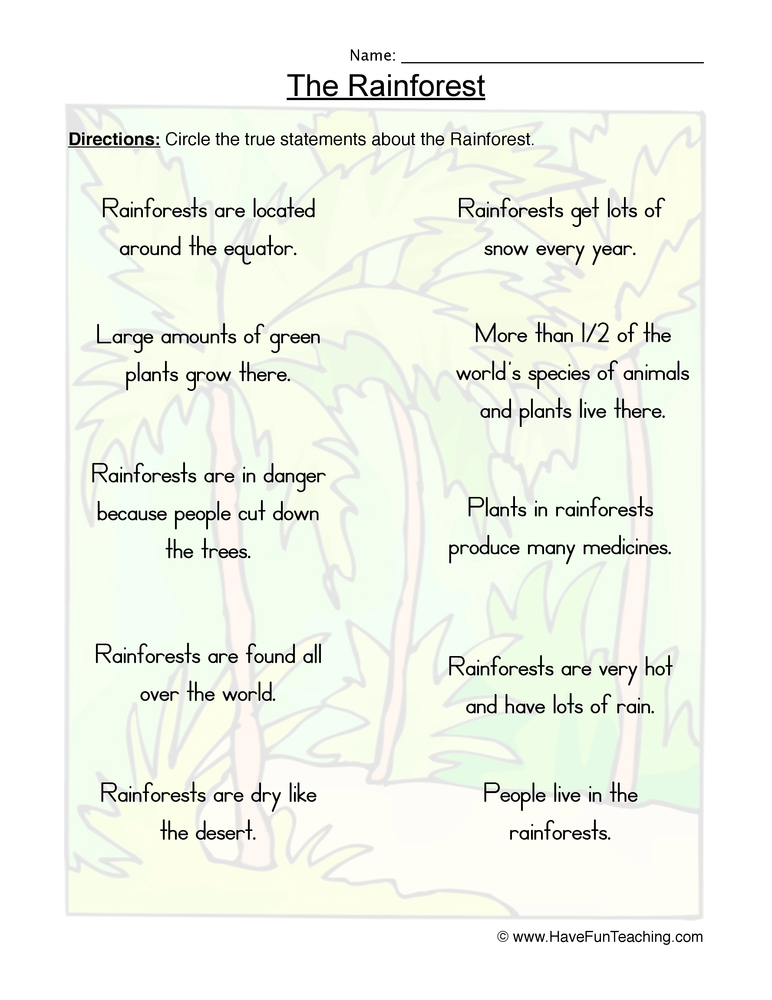 rainforest worksheet 2