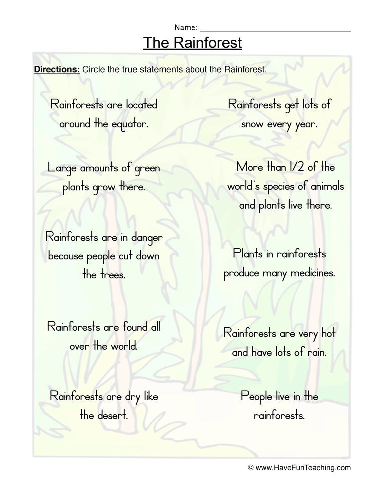Rainforest True or False Worksheet