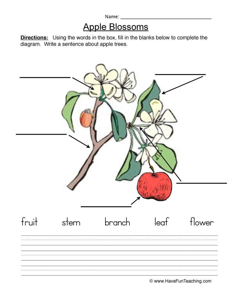 seeds plants worksheet 2