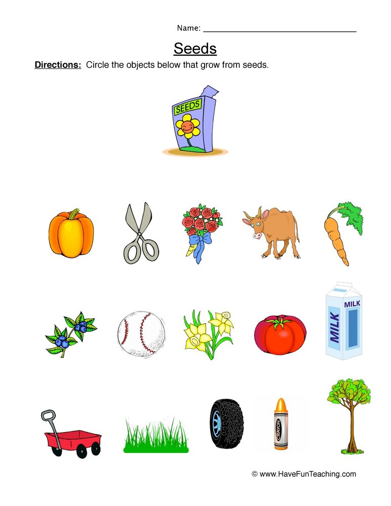 seeds worksheet 1