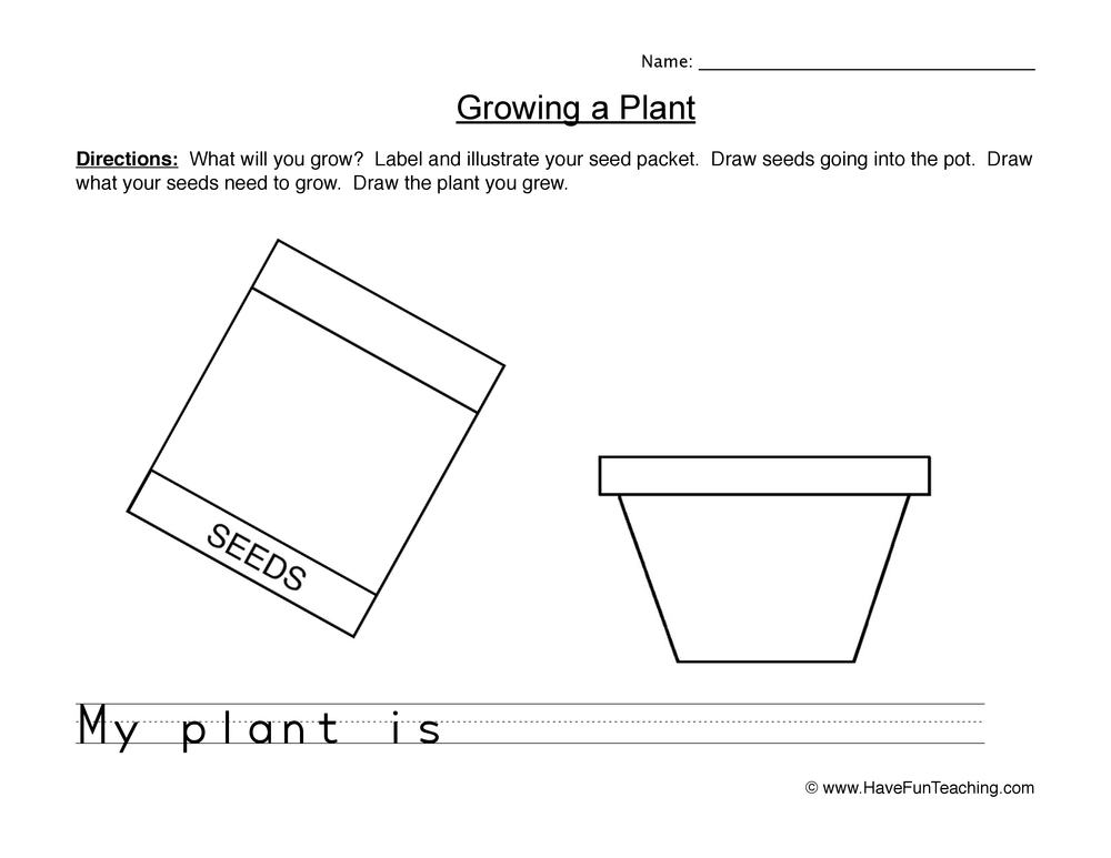 seeds worksheet 2
