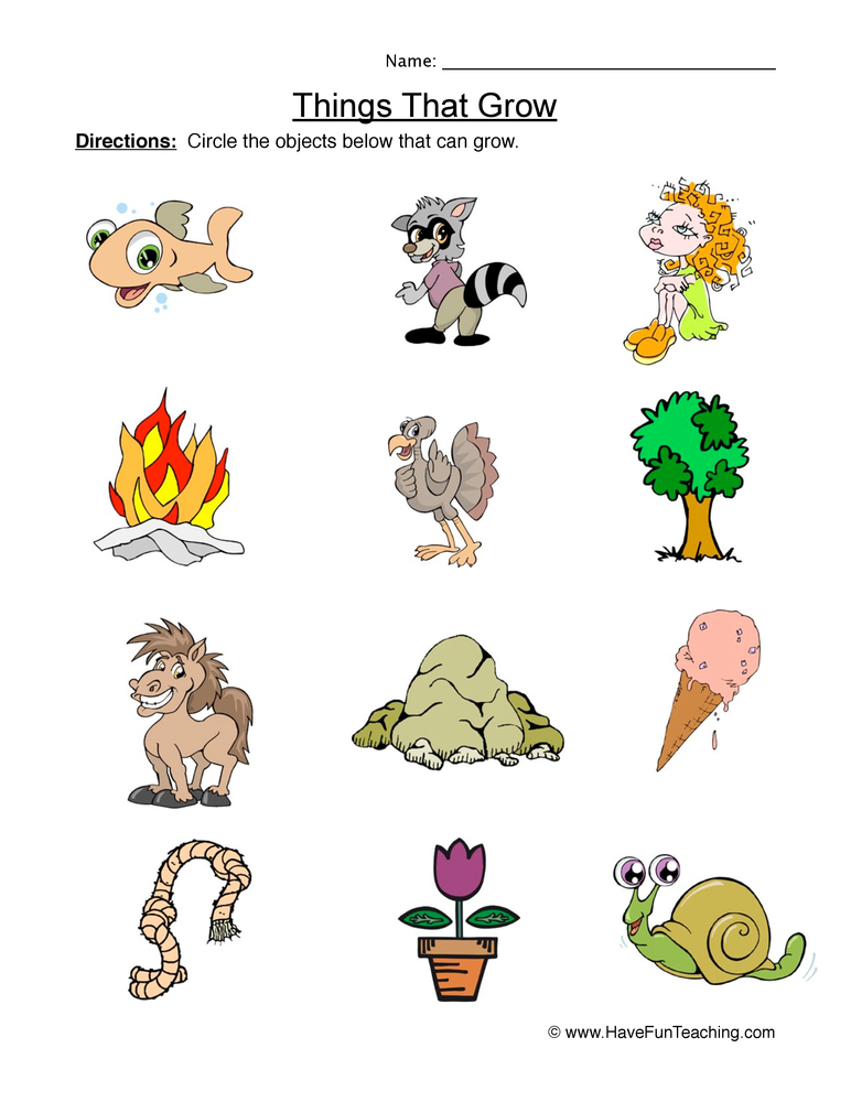 math worksheet : things that grow worksheet  identify : Living Things Worksheet For Kindergarten