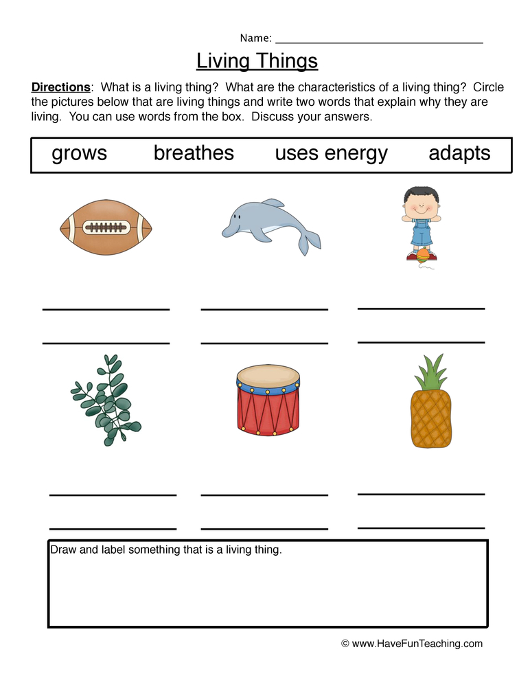 characteristics living things worksheet 1
