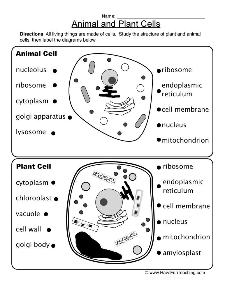 animal plant cells worksheet