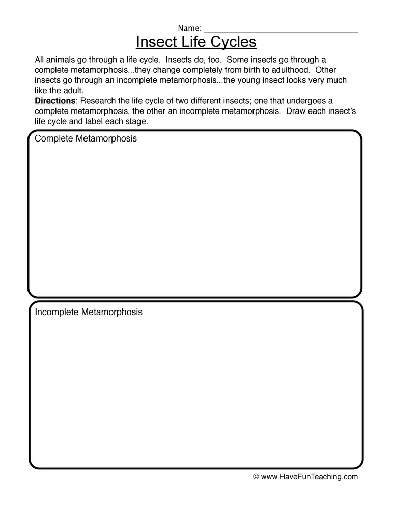 math worksheet : living and non living things worksheets  have fun teaching : Living And Nonliving Things Worksheets For Kindergarten