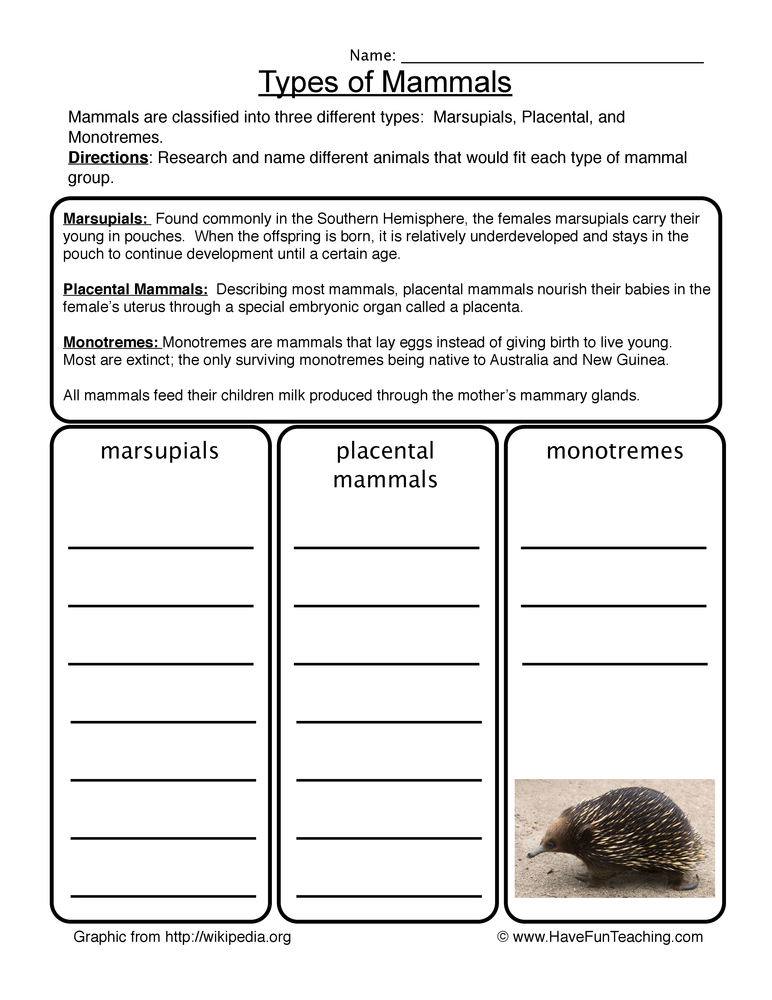 mammals worksheet