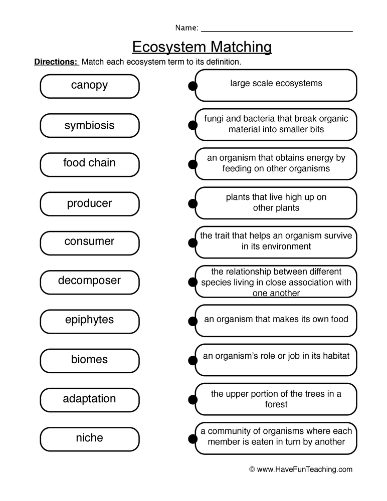 Printables Ecosystem Worksheet matching ecosystems worksheet 2 2