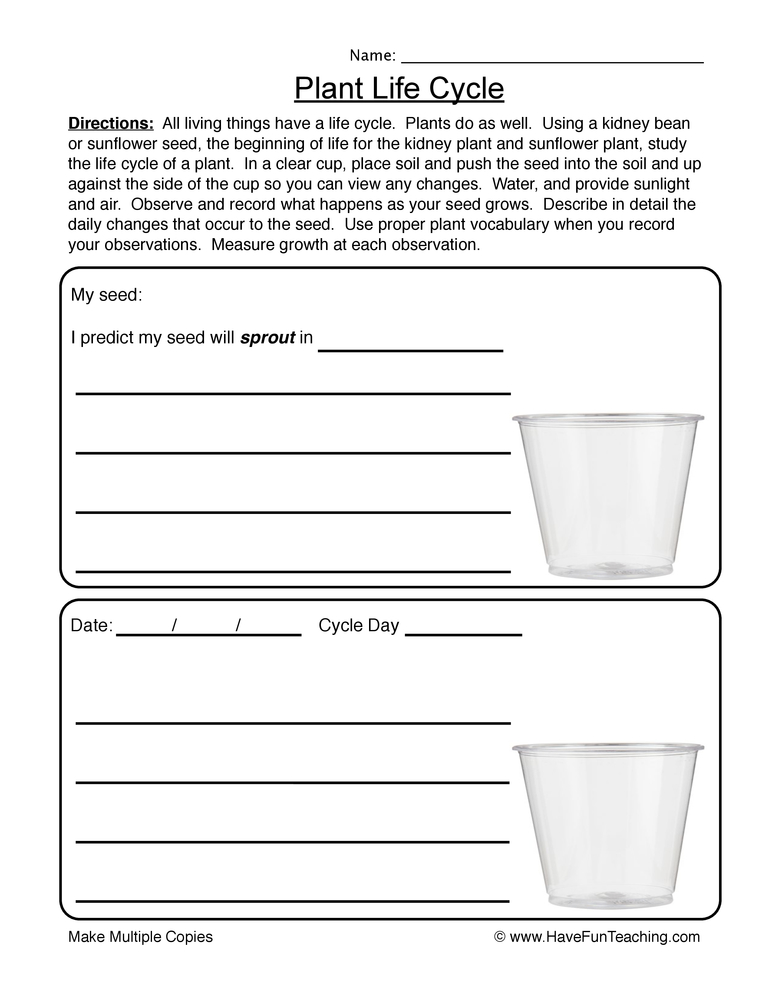 Cycle Of Plants Worksheet 1
