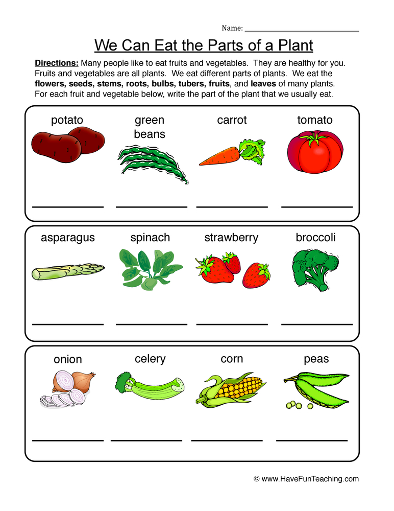 parts of a plant worksheet 2