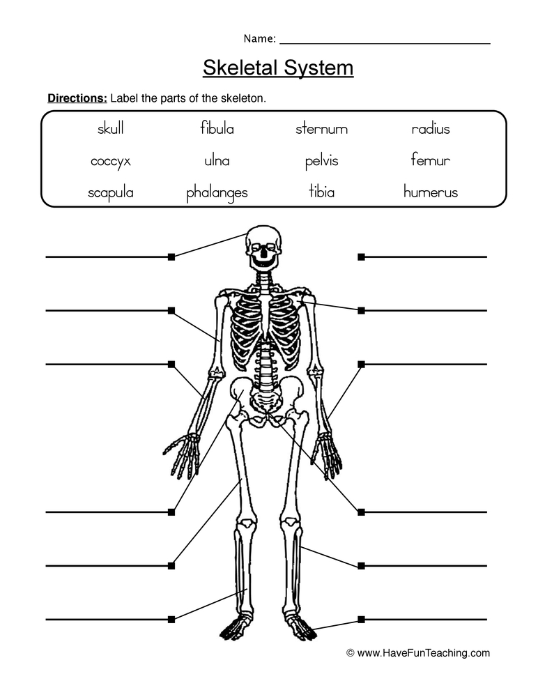 Label Skeletal System Worksheet