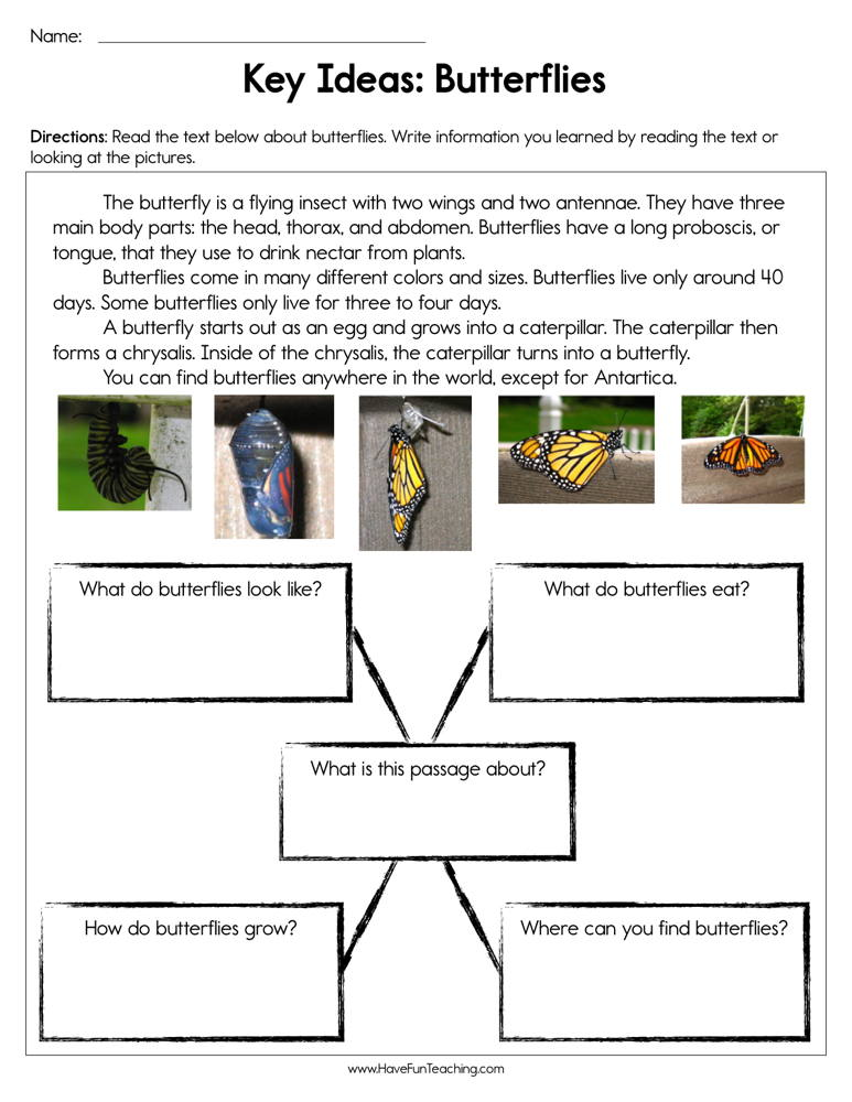 Key Ideas Butterflies Worksheet • Have Fun Teaching